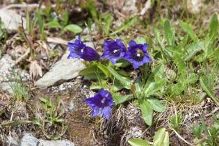 Alpenrosenwanderung im Ultental