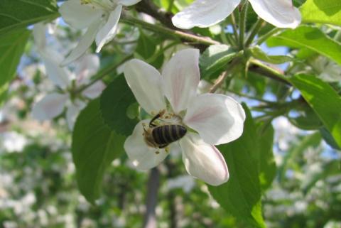 Blütenfest - Botanischer Garten + die meisten Seilbahnen geöffnet