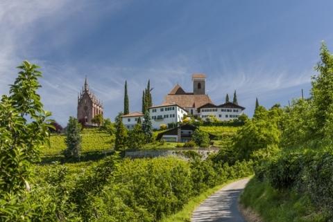 Bergblüte in Südtirol