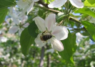 Blütespecial - Blüte so früh wie noch nie, Botanischer Garten ab 1.4. geöffnet